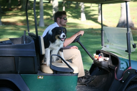 Golf course staff driving in an off-road vehicle with a dog
